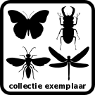 collectie_icon_v01